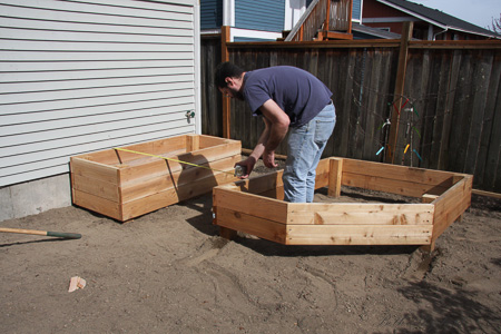 New planter boxes 2