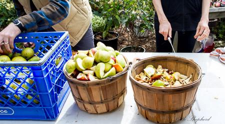 City Fruit apple cutting