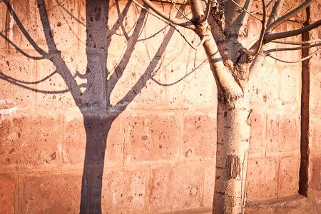 Tree and tuff stone in Gyumri