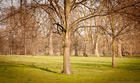 Kensington Garden trees