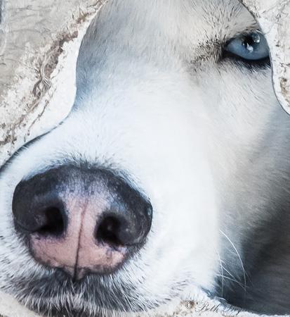 Blue eyes pink nose
