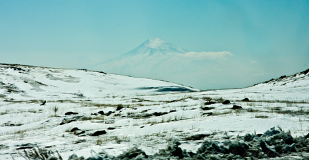 Aragats Fox and mountain in snow