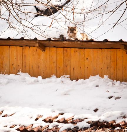 Kitty in snow near Gyumri