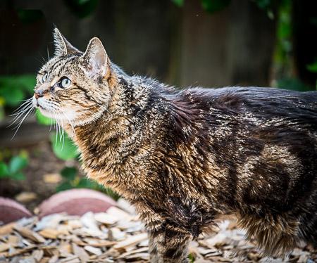 Maggie cat at 20