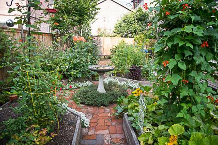 August in Our garden