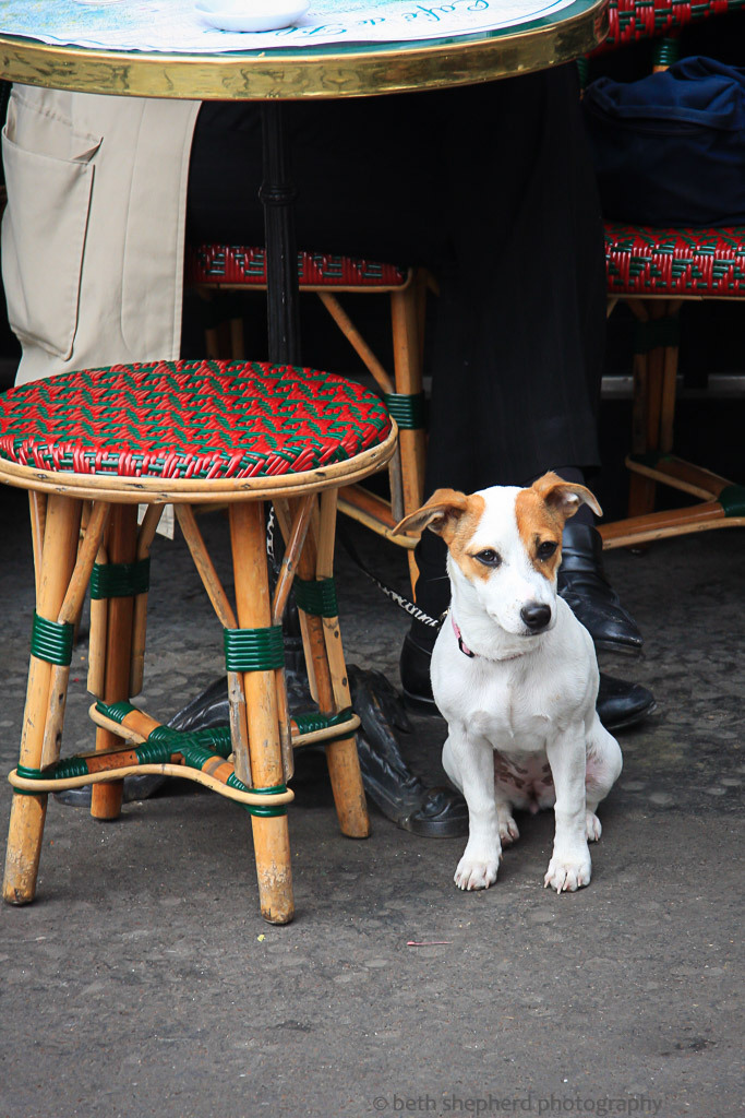 Dog at Paris cafe