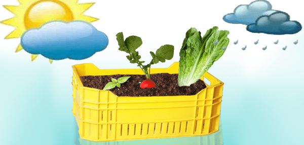 زراعة الخضروات في الأوعية و الأصص