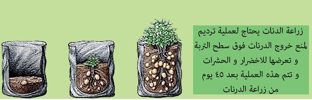 زراعة البلكونة بالخضروات
