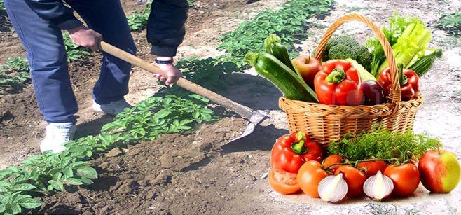 عمليات خدمة محاصيل الخضروات