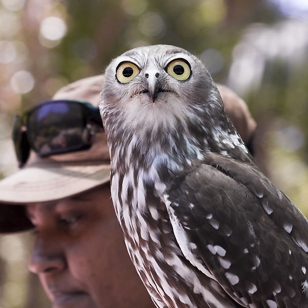 This owl was in the bird show and was incredibly awesome.