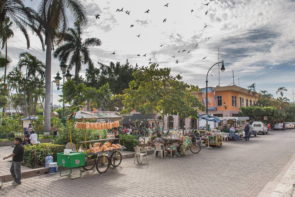 Birds, palm trees, and snack vendors in the central plaza outside the cathedral.