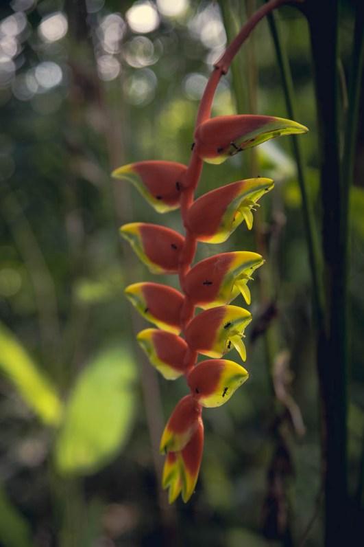 The jungle isn't just all shades of green, vines, trees and spiders. Sometimes there's flowers too…