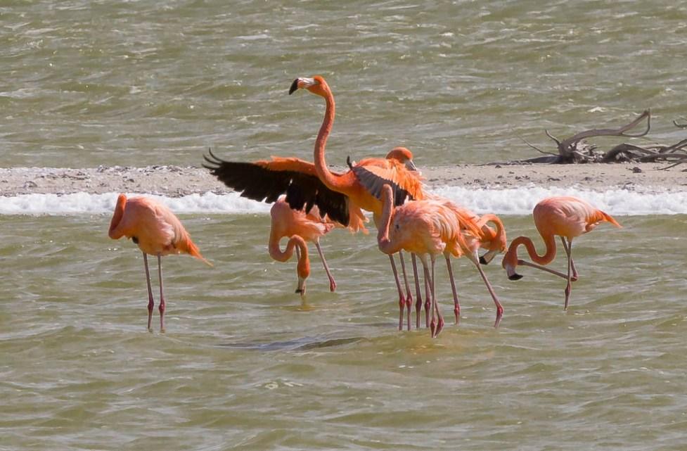More flamingos.