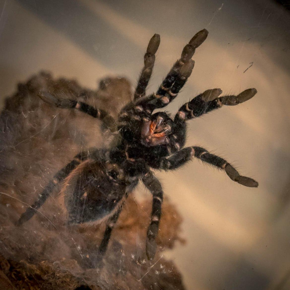Aaaaargh. Terror. Spider.