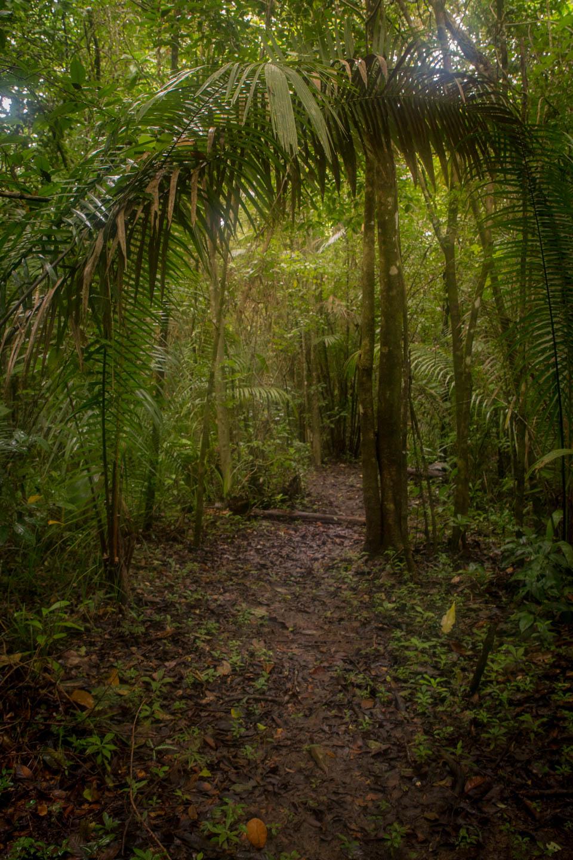 Belizian jungle