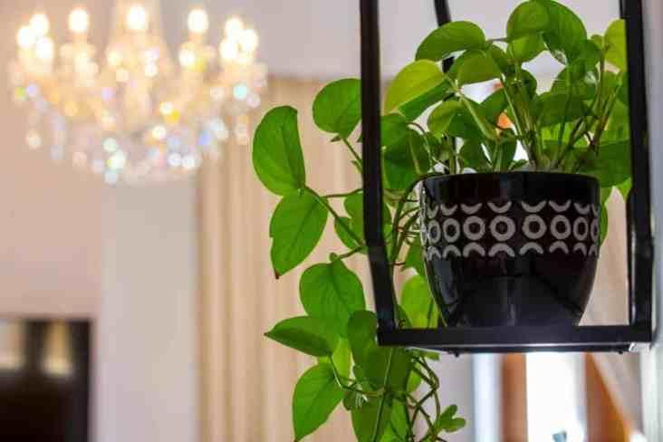 Plant decor in one of the rooms La Concordia Boutique Hotel