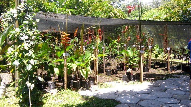 Carla Black Plant Sale