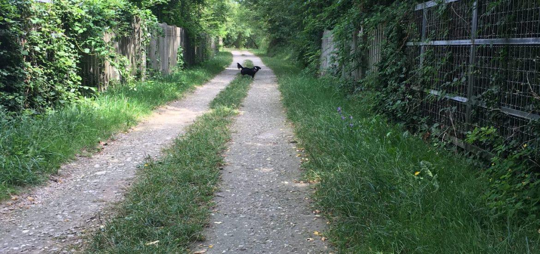passeggiata vecchia ferrovia Piovene