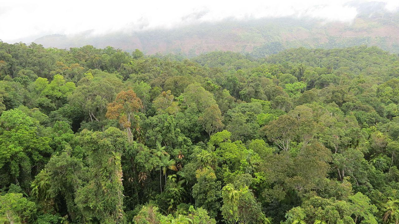 25.Daintree_Rainforest,_Queensland