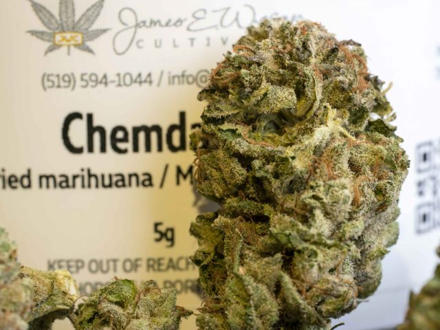Chemdawg by James E Wagner Cultivation