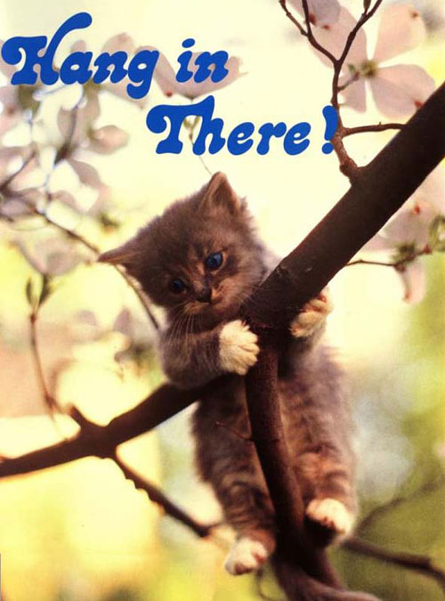hanginthere_cat