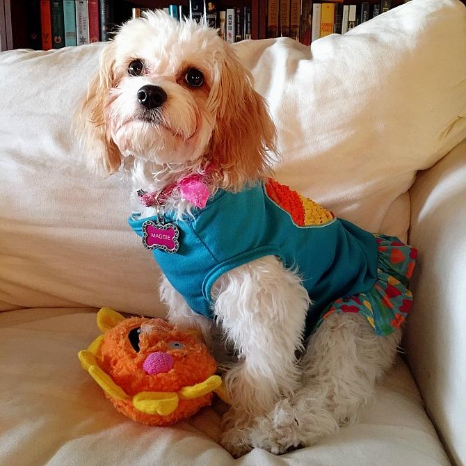 Maggie Rainbow Dress