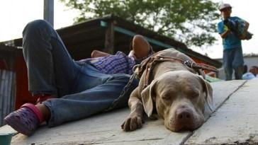 Bolillo, el perro de la caravana migrante