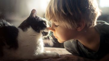 Una madre nos muestra el vínculo entre su hijo menor y sus gatos