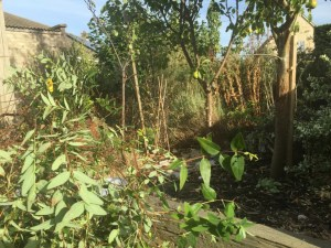 cuttings and tall weeds