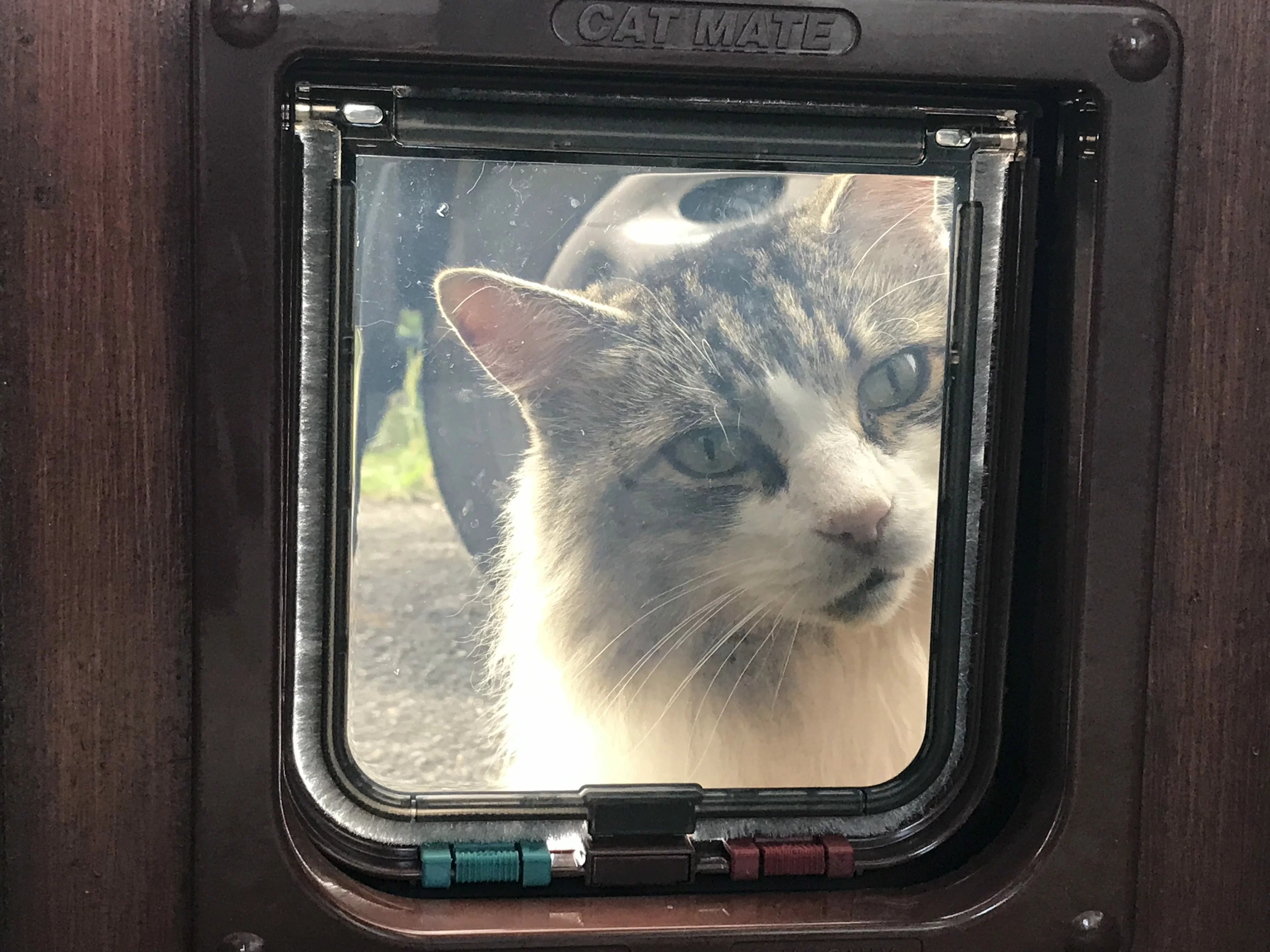 Mr Perkins looks through his newly installed cat flap