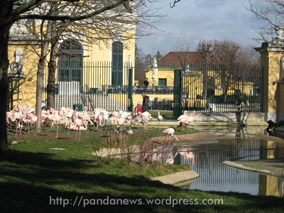 Rosa Flamingos, Kaiserpavillon im Hintergrund links, im Februar 2008