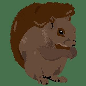 Ardilla - Ilustración en vectores