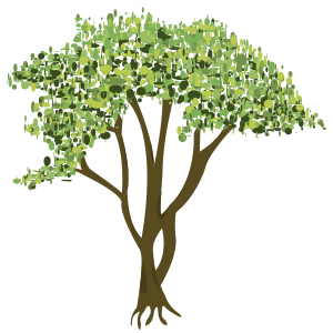 Mangle (avisennia bicolor) - Ilustración en vectores