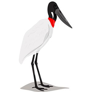 Jabirú - Ilustración en vectores