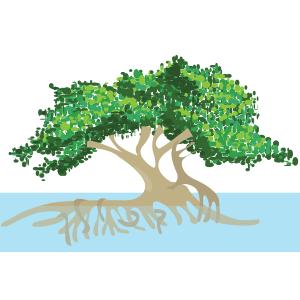 Mangle (rizophora recemosa) - Ilustración en vectores