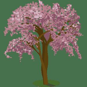 Apamate Rosa (Tabebuia rosea)