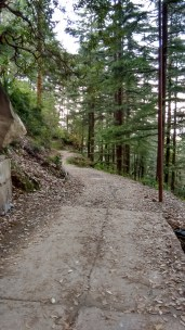 On the way to Dharamkot