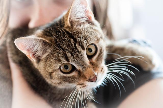 猫の室内飼い