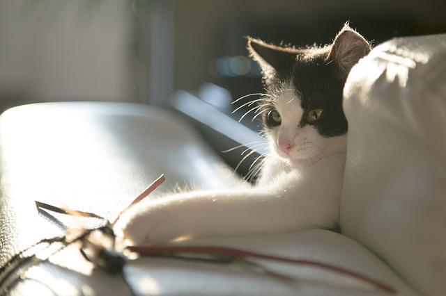 猫のストレス解消法