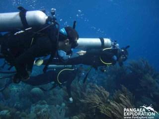 bermuda diving sailing