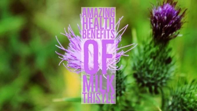Amazing Health Benefits Of Milk Thistle