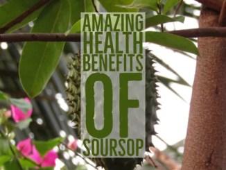 Amazing Health Benefits of Soursop