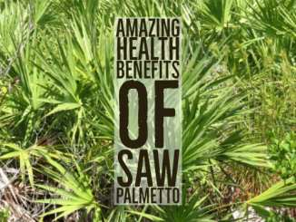 Health Benefits Saw Palmetto