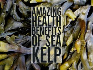 Amazing Health Benefits of Sea Kelp