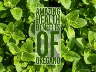 Amazing Oregano Health Benefits