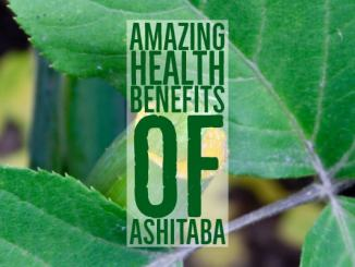 Amazing Health Benefits Ashitaba