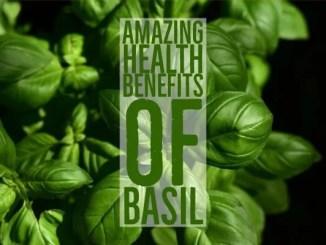 Amazing Health Benefits Basil