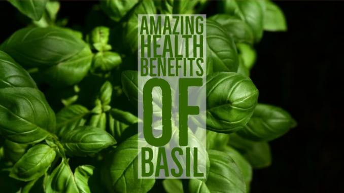 Amazing Health Benefits Basil