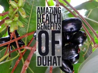 Amazing Health Benefits Duhat