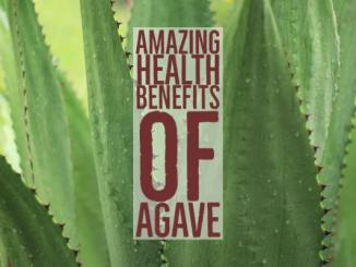 Amazing Health Benefits Agave
